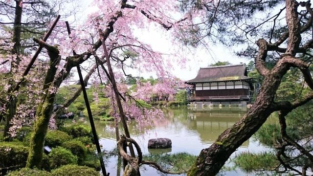 桜の季節の平安神宮の庭園